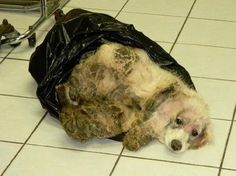 Dog thrown away in trash bag has died