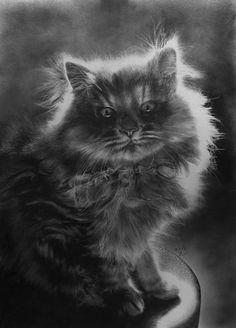 Paul Lung malt fotorealistische Katzen mit Bleistift  Manche Maler stellen die Motive in ihren Bildern so realistisch dar, dass man zweimal hinschauen muss, um festzustellen, dass es keine Fotos sind. D...