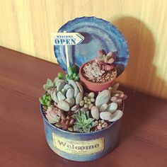 Tin Can Crafts, Diy Home Crafts, Plant Projects, Garden Projects, Garden Ideas, Succulents In Containers, Planting Succulents, Small Garden Fairies, Tin Can Art