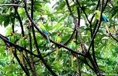 Ara Project,Costa Rica