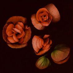 ɛïɜ Flowers ɛïɜ