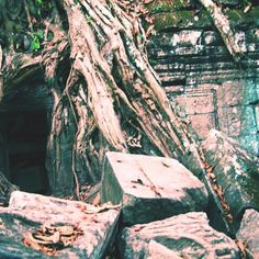 The Ta Phrom Temple buried in roots from the trees. #TaPhrom #Cambodia #SiemReap #tourism #travel