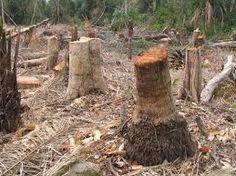 Resultado de imagen para Deforestacion en argentina