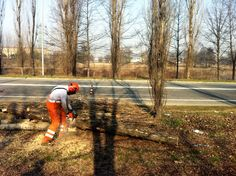 Abbattimento e riduzione volumetrica di alberi a rischio caduta a #torino #stupinigi #agirdea