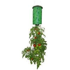 Hanging tomato planter - great for a small balcony garden.