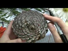 How Fibonacci Numbers are Expressed in Nature - awesome video.  And so pretty!