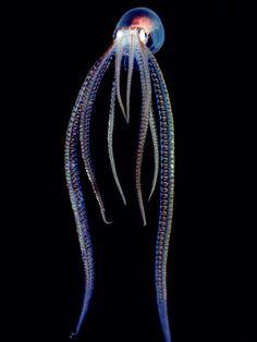 Transparent ocean creatures