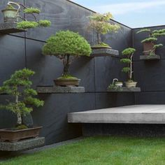 What a great idea: a few display shelves to put my bonsai trees on! ❤️