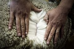 Wool in its natural setting