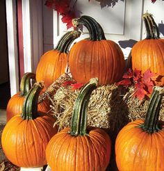 Johnny's Selected Seeds - Superior Seeds & Gardening Tools - WOLF pumpkins