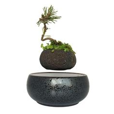 Cheap pot garden, Buy Quality potted plants directly from China tree pot Suppliers: 2018 magnetic levitation potted plant floating air bonsai tree pot garden beautiful gifts for men free shpping Bonsai Plants, Potted Plants, Bonsai Garden, Plant Pots, Floating Plants, Magnetic Levitation, Inside Plants, Abstract Nature, Garden Gifts