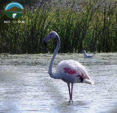 Ecosistema con habitat vegetale acquatico e ripario con molte specie protette