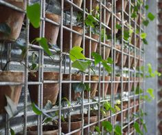 Sustainable restaurant Green House, Perth, Australia. Building covered in potted strawberry plants and ivy...