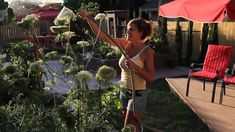 EPSOM SALT APPLICATION: 1 tablespoon per gallon in a watering can, or 1 cups in a 20 gal. hose end sprayer every 10 days to 2 weeks. How to use Epsom Salt in the Garden - Quick, Simple, Inexpensive Tomato Garden, Vegetable Garden, Garden Plants, Garden Works, Growing Roses, Epsom Salt, Colorful Garden, Edible Garden, Plant Care