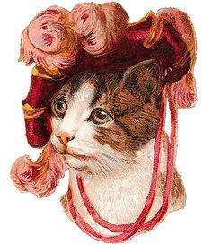 Victorian kitty