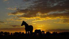 Taking care of retired horses. #horseswelove