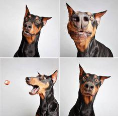 Un refuge pour animaux met des chiens dans un photomaton pour les faire adopter! Les photographies sont juste excellentes !