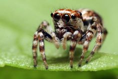 What Does Marijuana Do to Spiders? | How different drugs affect spider webs...