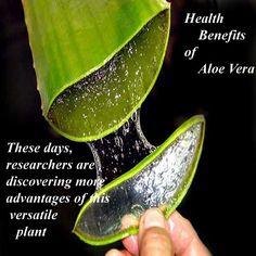 Top benefits of Aloe Vera :  *Strengthen gums and promotes strong and healthy teeth *Detoxifies the body *Lower high cholesterol *Supports immune system *Soothes arthritis pain *Protects the body from stress *Prevents Kidney stones *Cools and repairs sunburn skin *Cures ulcers *Reduces high blood pressure *Stabilizes blood sugar