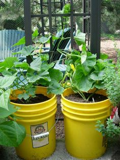 Tips for gardening with a 5 gal bucket: