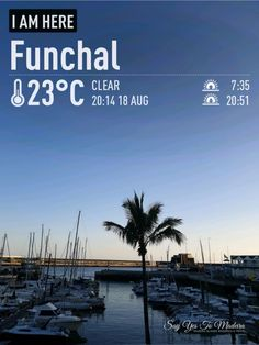 Weather in Madeira in August (2020) | Say Yes to Madeira August Weather, Sunny Weather, Funchal, Flower Festival, Photo Report, Ocean City, New Pictures, Island, Beach
