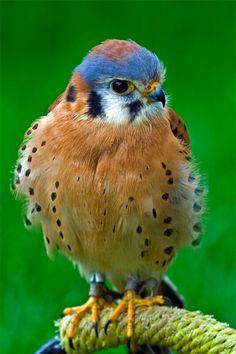 Love my birds