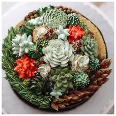 3D terrarium buttercream cake