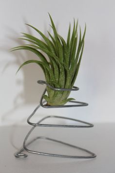Metal Stand with Air Plant by twoXsea on Etsy, $5.00