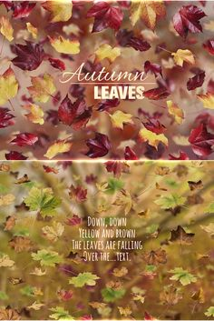 Falling Autumn Leaves - Create your own individual #falling #autumn #leaves pictures with his 4 #layered PSD-files for #Photoshop CS6 and newer. This is perfect for #advertisement, web page #header #banners, #book #covers, or #greeting #cards. - Download from FEINGOLD Shop: http://bit.ly/1UbT93c or CreativeMarket: http://crtv.mk/f0SXR
