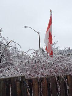 Ontario, Canada. Ice storm of December 2013.