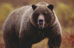 bear1.jpg (640×422)