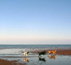 Duke, Winnie Dixon  Maggie Sue @ Pugwash Point, Nova Scotia - Blog - 29 Black Street