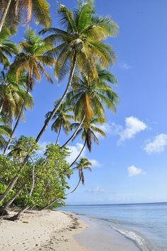 Pigeon Point, Tobago - #Caribbean  http://www.vacationrentalpeople.com/vacation-rentals.aspx/World/Caribbean/Tobago
