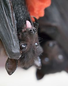 If You Think Bats Are Terrifying These 40+ Pics Will Change Your Mind