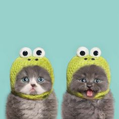Two kittens in knit frog hats are definitely better than one
