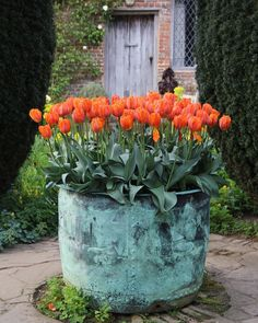 "Tulipa ""Prinses Irene"" in a copper planter in the Cottage Garden at Sissinghurst Castle Garden, Kent, in May -- Sissinghurst Castle Garden -- High quality art prints, canvases, postcards -- National Trust Prints Copper Planters, Garden Planters, Copper Tub, Copper Pots, Container Plants, Container Gardening, Plant Containers, Container Flowers, Pot Jardin"