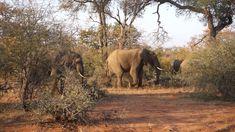 Klaserie Sands Luxury Safari where you can see plenty of elephants! South Africa Safari, Safari Holidays, Nature Gif, Zimbabwe, Sands, Elephants, Night Life, Travel Guide, Places To Visit