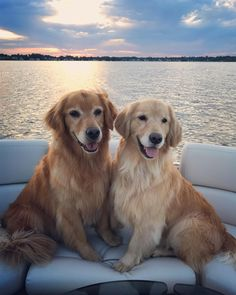 "5,684 Likes, 145 Comments - Goldens Teddy, Harper, Sophie (@hoosierfavoritegoldens) on Instagram: ""A sunset cruise to finish off a perfect day with these sweetie pies. #lifeisgood…"""