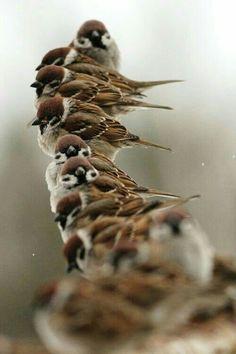 Sparrow row - for the birds Pretty Birds, Love Birds, Beautiful Birds, Animals Beautiful, Cute Animals, Birds 2, Tier Fotos, Little Birds, Fauna