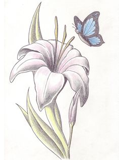 flower amp butterfly tattoo draw classic lily flower with butterfly - lily tattoo sketch Water Lily Tattoos, Lily Flower Tattoos, Flower Tattoo Foot, Flower Tattoo Shoulder, Lilies Tattoo, Baby Tattoos, Side Tattoos, Cover Up Tattoos, Funny Tattoos
