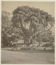 Een Balinese begraafplaats