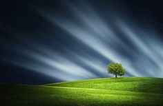 Photograph Tree at night by Bess Hamiti on 500px