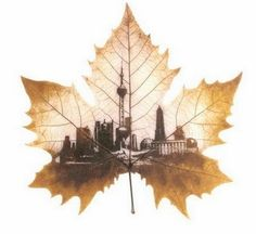 In this post, I am to introduce you another art form - leaf Art. Leaf art is done on dry leaves such as Peepal leaves or banayan tree leaves. Amazing Drawings, Amazing Art, Collage Kunst, Painted Leaves, Art Carved, Leaf Art, Cool Paintings, Oeuvre D'art, Autumn Leaves