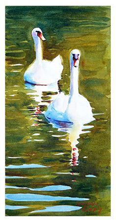Graham Berry - Portfolio of Works: Small paintings. Watercolor Bird, Watercolor Animals, Watercolor Paintings, Watercolors, Small Paintings, Animal Paintings, Animal Drawings, Swan Painting, Wildlife Art