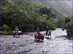 Horseback riding in Waipi'o Valley (Big Island, Hawaii)