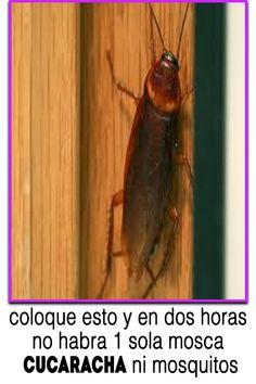 coloque esto y en dos horas no habra 1 sola mosca cucaracha ni mosquitos as Mosquitos, Health And Beauty Tips, Home Hacks, Euphorbia Milii, Control, Crown, Cleaning, Glass Vase, Gardens