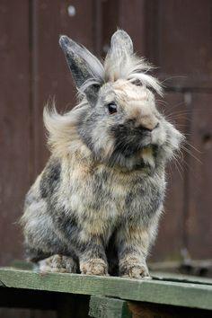 Rabbit at Balsall Heath City Farm - photo by balsallheathan (Peter Cole) on Flickr