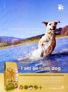 dog ad - Google Search