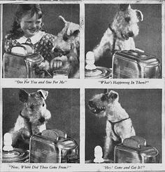 1935: Fox-Terrier-Toaster-Ad.