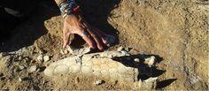 Hallaron la cola de un gliptodonte en el Lago Epecuén - Revista El Federal